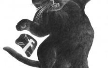 snsvsblackcat